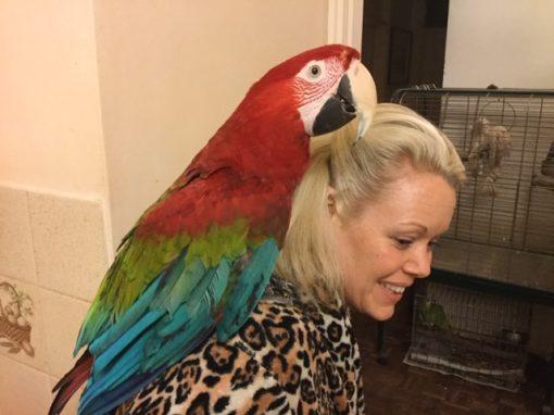 Big Lenny Macaw